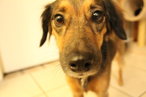 I was up all night taking shots with my camera when I first got it. This is one of the first few I liked. My sweet puppy dog's eyes.