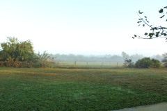 Foggy morning over the back pasture.
